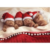 Boxed Cat Christmas Cards